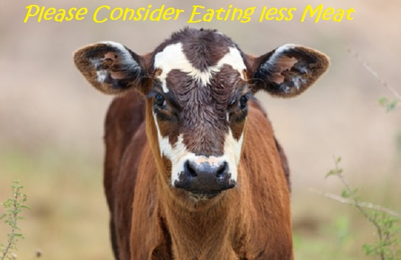 The Benefits of Eating Less Meat