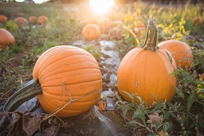 Fall pumpkins and fall squash